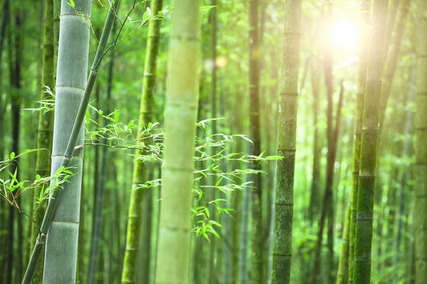 bamboo with light