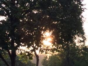 Morning Light 3