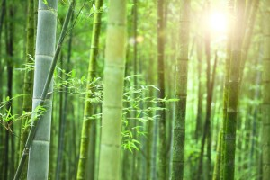 bamboo-with-light
